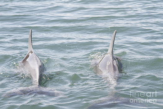 Twin Dolphins by Crystal Beckmann