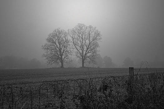Foggy Countryside by Kelvin Taylor