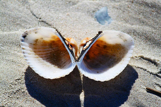 Twin Seashells by Ella Char