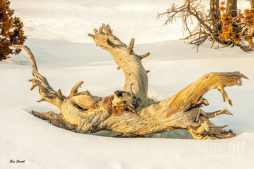 Twisted Dead Tree by Sue Smith