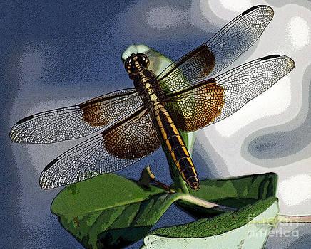 Bob Hislop - Twisted Dragonfly