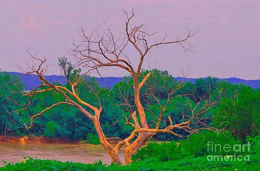 Liane Wright - Twisted Tree at Rivers Side