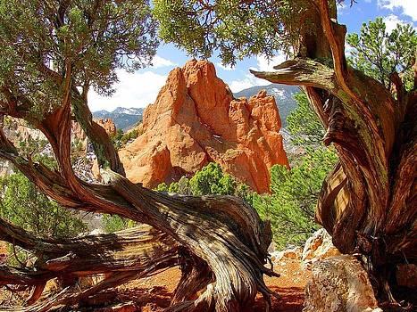 Twisted Tree Frame by Jane Girardot