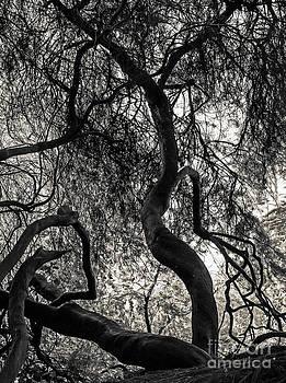 Kate Brown - Twisted Tree