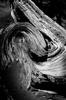 Twisted Wood by Tom Wenger
