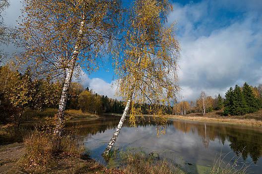 Two birches by Konstantin Gushcha