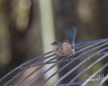 Two Birds on Wire by Serene Maisey