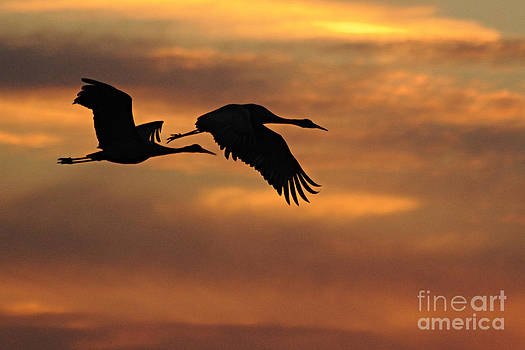 Larry Ricker - Two Cranes at Sunset