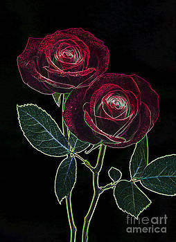 Two deep red roses by Rosemary Calvert