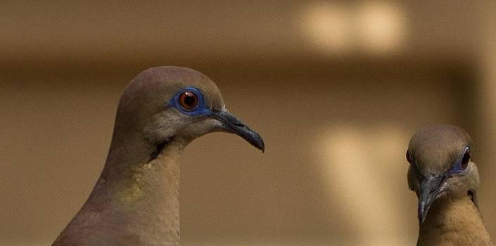 Bonnie Davidson - Two Doves