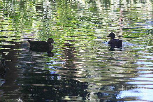 Two Ducks on a Pond by Sara Ricer
