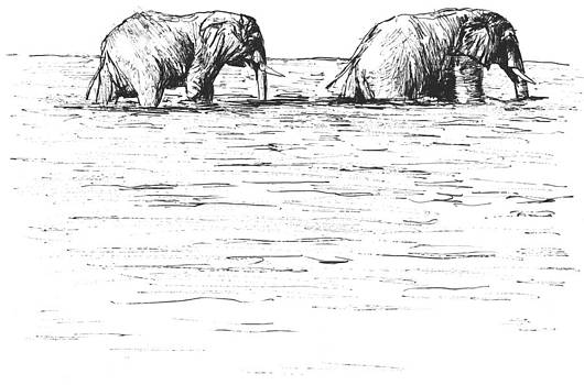 Two Elephants Fording A River by Luke Forster