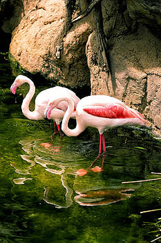 Two flamingos by Goyo Ambrosio