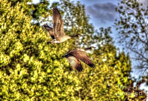 Two Flying Geese by Skye Ryan-Evans