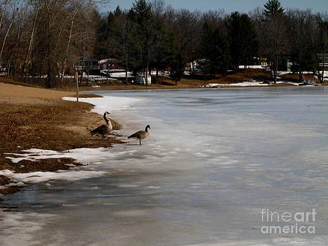 Two Geese Welcome Spring on Williams Island by Erica  Darknell