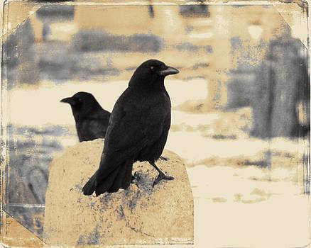 Gothicrow Images - Two Graveyard Blackbirds