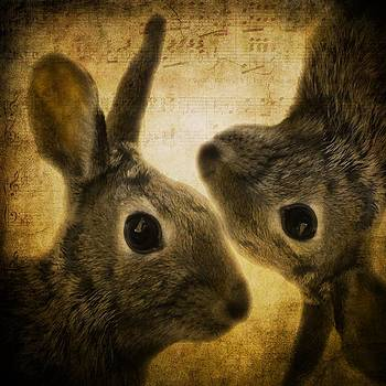 Gothicrow Images - Two Hares