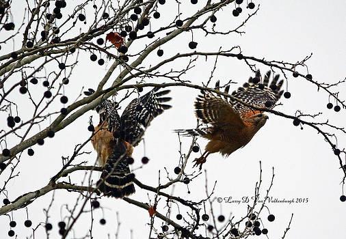 Two Red Shouldered Hawks In A Tree by Larry Van Valkenburgh