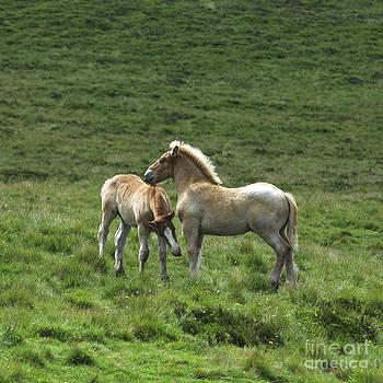 BERNARD JAUBERT - Two Horses