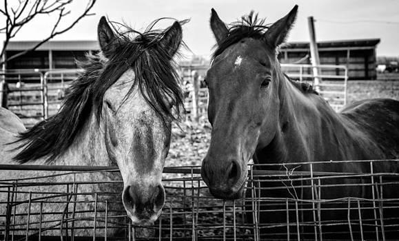 Ray Van Gundy - Two Horses