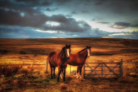 Two Horses in Patagonia by Roman St