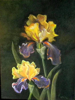 Two Iris by Judie White