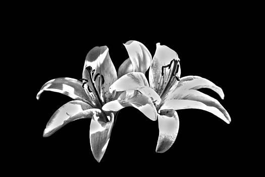 Two Lilies by Loki Pestilence