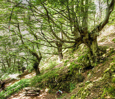 Weston Westmoreland - two little brothers Chasing Fairies in theBeech Forest on a summer day