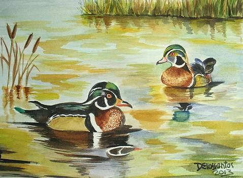 Two Male Wood Ducks by Kristina Delossantos
