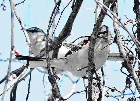 Two Mocking Birds by Heather Grow