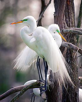 Two of a kind by Tammy Smith