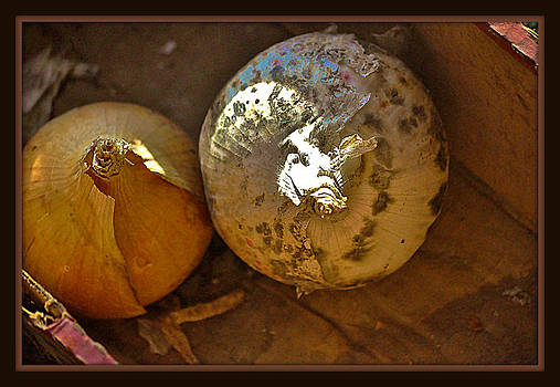 Two Onions by Mary Frances
