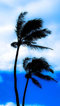 Two Palms by Lisa Cortez