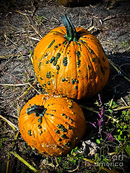 Two Pumpkins by Colleen Kammerer