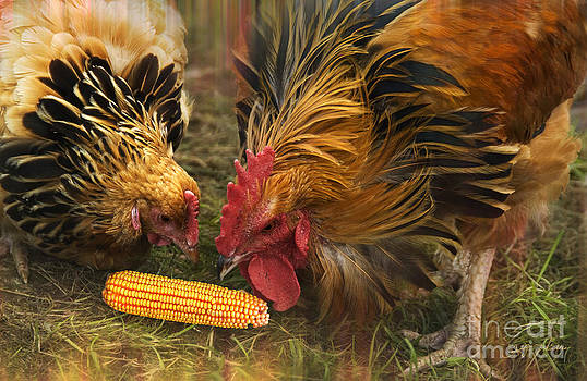 Two Rooster Share a Ear of Corn by Heinz G Mielke