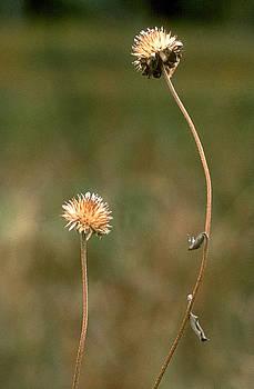 Harold E McCray - Two seeds