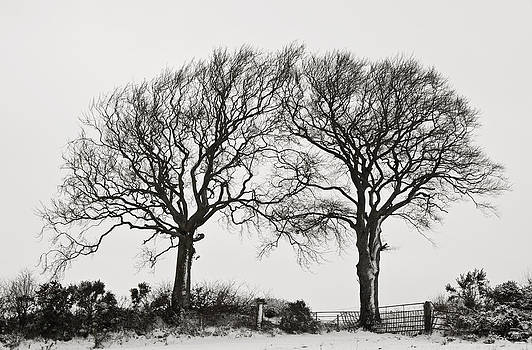 Two snowy trees by Pete Hemington