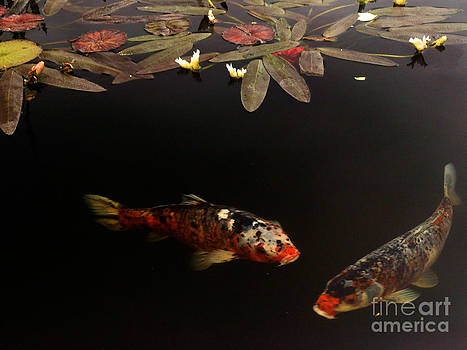 Two Spotted Koi by Lawrence Costales