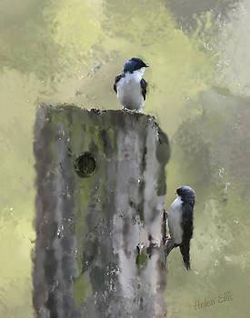 Two Swallows by Helen Ellis