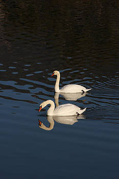 Two Swans by Bob and Jan Shriner
