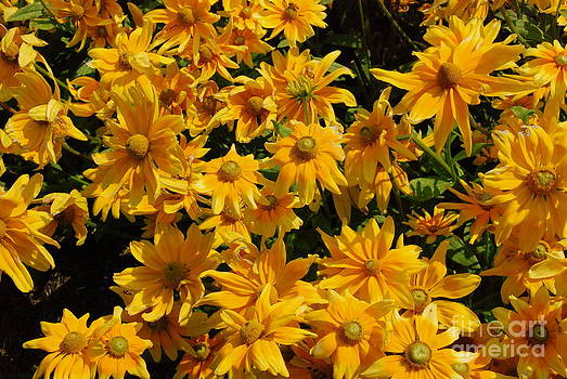 Two Toned Yellow Blooms by Eunice Miller