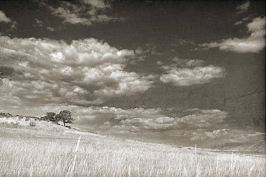Two trees in a grassy field with a cloudy sky in sepia by Kim M Smith