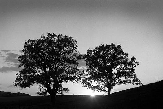 Two Trees in Sunset by Lonnie Paulson