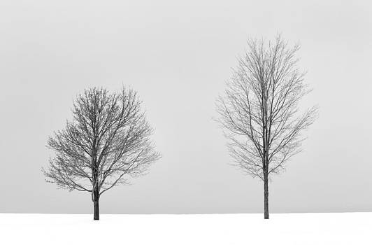 Two Trees by Rebecca Skinner