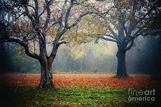 Two Trees Tangled by Katya Horner