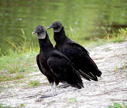 Linda Rae Cuthbertson - Two Vultures Just Waiting