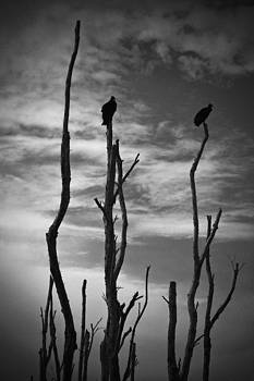 Two Vultures On Dead Trees by Bradley R Youngberg