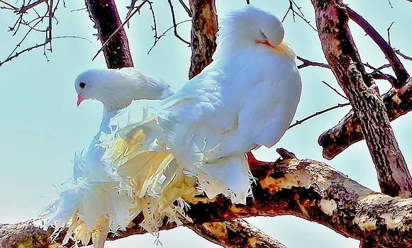 Rick Todaro - Two White Doves