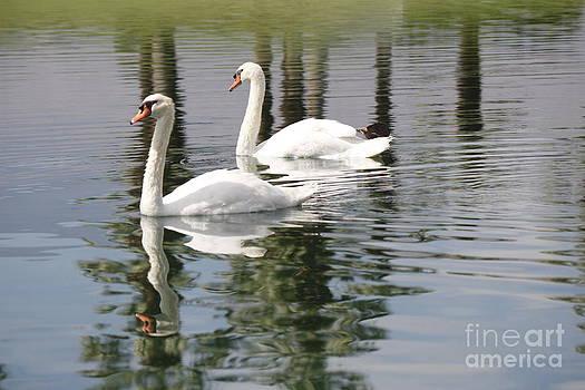 DJ Laughlin - Two White Swans