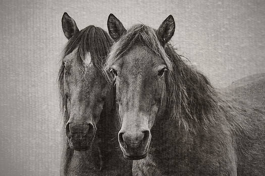 Two Wild Horses by Bob Decker